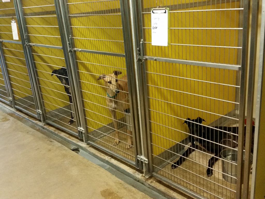 Chilling Out In The Kennel