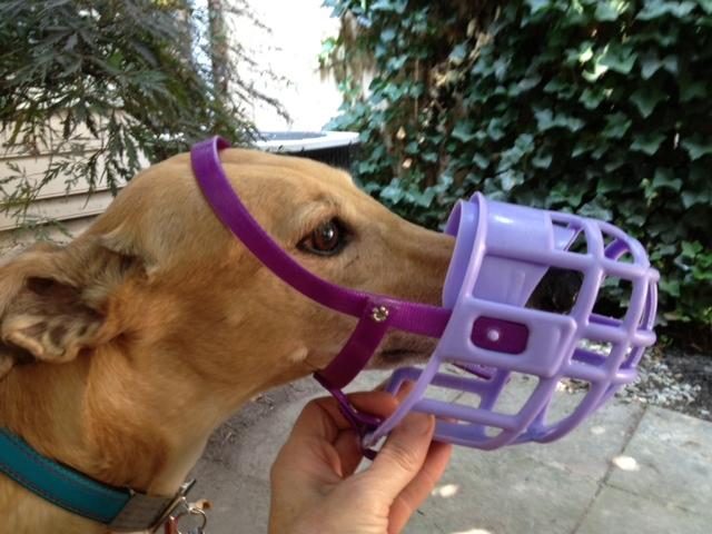 Plastic Muzzles Greyhound Friends Of Nc