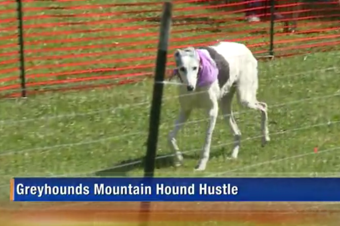 Mountain Hounds Featured On Knoxville TV