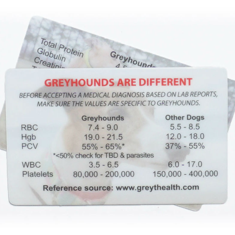 Greyhound Medical Card