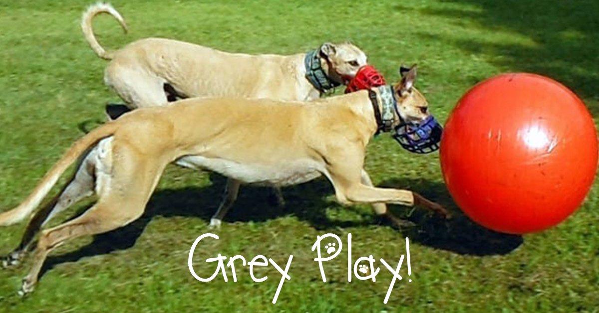 Grey Spiel