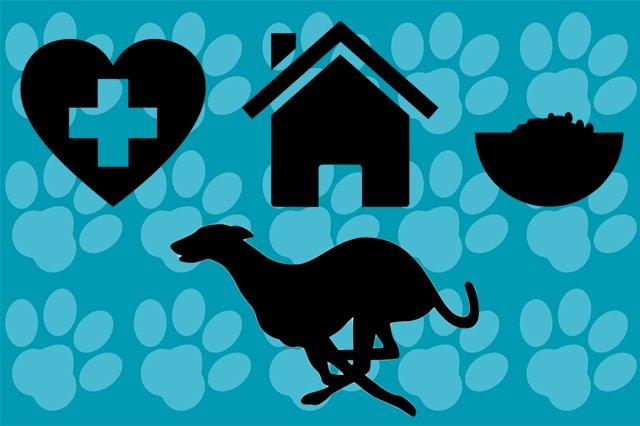 Greyhound Savvy Vets